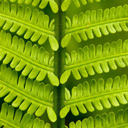 Murals Your Way - Sword Fern Details 2 Wall Art - Photographed by Stephen  Matera, Sword Fern Details 2 wall mural from Murals Your Way will add a distinctive touch to any room