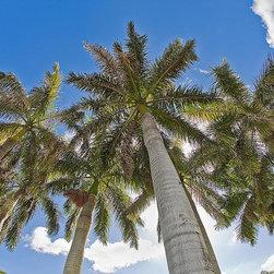 Magic Murals - Bahama Islands Towering Palms Wallpaper Wall Mural - Self-Adhesive - Multiple Si - Bahama Islands Towering Palms Wall Mural