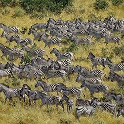 Magic Murals - Zebra Migration Wallpaper Wall Mural - Self-Adhesive - Multiple Sizes - Magic Mu - Zebra Migration Wall Mural