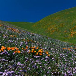 Walls 360, Inc. - Wildflowers on a Hillside California Panoramic Fabric Wall Mural - Transform your empty walls with Walls 360's premium, repositionable wall graphics.
