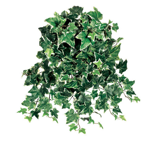 Silk Plants Direct - Silk Plants Direct Ivy Hanging Plant (Pack of 12) - Pack of 12. Silk Plants Direct specializes in manufacturing, design and supply of the most life-like, premium quality artificial plants, trees, flowers, arrangements, topiaries and containers for home, office and commercial use. Our Ivy Hanging Plant includes the following: