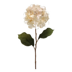 Silk Plants Direct - Silk Plants Direct Gold Edged Sheer Hydrangea (Pack of 12) - Pack of 12. Silk Plants Direct specializes in manufacturing, design and supply of the most life-like, premium quality artificial plants, trees, flowers, arrangements, topiaries and containers for home, office and commercial use. Our Gold Edged Sheer Hydrangea includes the following: