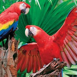 Scarlet Macaw Puzzle - 400 Piece Jigsaw PuzzleWhat's better than one Scarlet Macaw? Try two, especially when one has wing's fully spread. If you love wildlife, the vibrant hues of these extra large parrots will dazzle you. This is nature at its best: rich color and exotic plumage make this Family Puzzle� something the entire family can talk about.