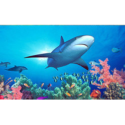 "Biggies, Incorporated - Wall Mural - Shark Reef - Shark Reef Wall Mural! Decorate instantly with strong visual impact. Create a gorgeous scenic backdrop with the largest one-piece wall mural on the market. No strips, no paste, no mess. 54"" X 26.75"""