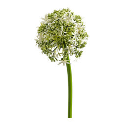 Silk Plants Direct - Silk Plants Direct Allium (Pack of 12) - Cream - Pack of 12. Silk Plants Direct specializes in manufacturing, design and supply of the most life-like, premium quality artificial plants, trees, flowers, arrangements, topiaries and containers for home, office and commercial use. Our Allium includes the following: