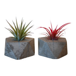 "Anson Design CO - Concrete Planter with Air Plant - Set of 2 - Icosahedron, Natural Concrete - These beautiful new concrete planters are derived from the icosahedron, the symbol of water in sacred geometry. This shape is a reminder to ""go with the flow""; allowing freedom of expression, creativity and positive change to flow effortlessly through us."