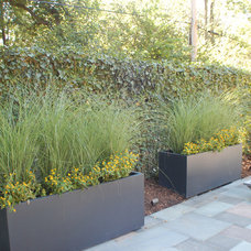 Contemporary Landscape by Gardens of Growth