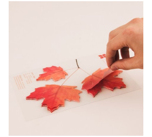 Leaf-it - They may look like fall leaves, but they're actually sticky notes! They're so clever and pretty that you'll want to leave them everywhere.