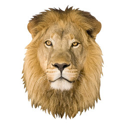 Walls Need Love - Lion, Adhesive Wall Decal - This amazing wall decal allows you to honor the King of the Jungle in the space that you rule. It realistically captures his piercing eyes, sprouting whiskers and distinguished golden mane.