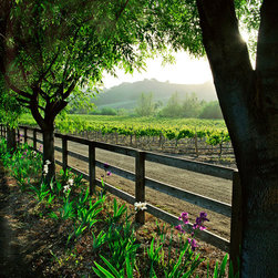 Murals Your Way - Spring In The Vineyard - Vertical Wall Art - It's springtime in the vineyard and the irises are blooming along a fence line in this photographic wall mural