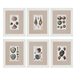Paragon - Sea Shells PK/6 - Framed Art - Each product is custom made upon order so there might be small variations from the picture displayed. No two pieces are exactly alike.