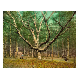 The Wizard Tree, Cathedral Woods, Intervale, N.H Print - The Wizard Tree, Cathedral Woods, Intervale, N.H., Photographe by the Detroit Publishing Company in 1900. Image is a color photochrom. Wizard Tree, Cathedral Woods, North Conway, The White Mountains.
