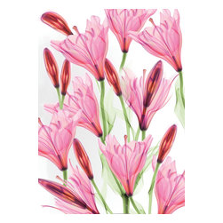 """Dr.Paula Fontaine/ Radiant Art Studios (RAS) - X-Ray Photograph of Pink Lillies Under Acrylic  20 x 24"""" - This stunning wall art is created by surgeon, Dr. Paula Fontaine, who uses medical x-ray technology to create vibrant and unique designs. The originally black and white images are enhanced with color using a digital hand-painting technique.  The images are mounted behind 1/4 inch acrylic and a gallery-style float mount apparatus is attached from behind for easy hanging."""
