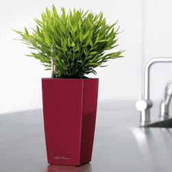 """Lechuza - Lechuza Maxi Cubi Self-Watering Planter - 18053 - Shop for Planters and Pottery from Hayneedle.com! The Lechuza Maxi Cubi Self-Watering Planter offers a hassle-free and ultra-stylish way to grown flowers and plants. This lightweight polypropylene planter is shatterproof and UV-resistant and comes in a variety of colors. But it's what's inside that really counts. A signature water reservoir and wicking system keeps your plants watered for up to 12 weeks. Water is drawn to the plants roots - where it's needed most - and an easy-to-read water level indicator lets you know when it's time to refill. This planter includes an ample supply of PON for proper aeration and plant nutrients. How the Lechuza Self-Watering System WorksThis modern cube-inspired planter uses a self-watering sub-irrigation system to nourish your plant. The included separator piece forms a reservoir in the base of the removable planter liner. A supply shaft with water level indicator runs along the inside edge of the liner making it easy to add water and liquid fertilizer while maintaining complete watering control. A layer of LECHUZA-PON granulate drainage material lies on top of the separator and regulates the amount of water your plant receives - no more rotten roots! After potting your plant with soil on top of the pon drainage material you will need to water the plant from above through the soil for the first 12 weeks. Each time you water fill up the supply shaft too and don't forget to add liquid fertilizer every other watering. After that the plant roots will have grown deep enough to soak up water from the reservoir below. All you have to do is refill the water supply shaft when the level indicator reaches the """"Min"""" position. At this point your plant will be entirely self-sufficient for 1-12 weeks depending on the size of your planter and plant. If using outdoors remove drainage plug from base to release excess rain water while still maintaining reservoir supply. About LechuzaThe Bra"""