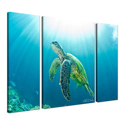 "Ready2HangArt - Ready2HangArt Christopher Doherty 'Sea Turtle' Canvas Wall Art (3 Piece) - Renowned photographer Chris Doherty, takes you on adventures under and above water thru his imagery. This 3 piece photograph is offered as part of a limited ""Home Decor"" line, being the perfect addition to any living or work space."
