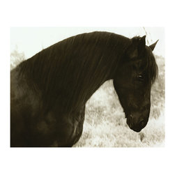 Peaceful - Framed Print - The horse photographed to create Peaceful offers a look of calm and composure to your room, but as a compositional element, the animal's dark coat forms a striking profile against the soft-edged background. Ideal for invoking the outdoors in the styling of an interior, Peaceful is framed in dark wood and makes a superb way to appreciate both the powerful form of the horse and the impact of photography.