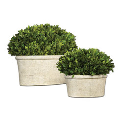 Uttermost - Oval Domes Preserved Boxwood, Set of 2 - Every home can use a touch of greenery and this set of realistic boxwood plants will add a lovely focal point in your space. The oval shapes are inviting so you could put them on a sideboard flanked by pillar candles or on a shelf in your library.
