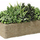 Succulents In Rectangular Wound Rope Pot - I don't have a green thumb, so you'll find me using succulents a lot around my house, office and even for centerpieces. They are beautiful, unique and last forever.