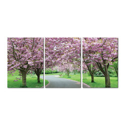 Baxton Studio - Baxton Studio Spring in Bloom Mounted Photography Print Triptych - Flowers in place of foliage adorning tree branches are among the first signs of spring. The promise of new life abounds in this pristine photograph printed on three waterproof vinyl canvas sheets. Your new modern wall art is made in China with MDF wood frames, is fully assembled and ready to hang, but does not include mounting hardware.