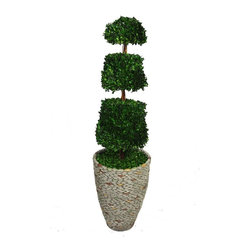 Laura Ashley - 58 in. Tall Preserved Natural Spiral Boxwood Cone Topiary - This preserved boxwood topiary will instantly liven up your home or office decor.. No need to shop for a planter separately - comes complete with decorative planter. Comes with a Spritzer; all you have to do is spray it once a month.. All Natural Preserved Boxwood Leaves.. 16 in. L x 16 in. W x 57.5 in. H (12 lbs.)