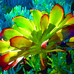Succulent on Blue - In the morning the sunlight illuminates an Aeonium succulent that is growing in a bed of blue senecio. The warm colors glow on the cool blue. I create my digital art in Photo Shop from my photographs. When viewed indoors, the art glows and illuminates the space. Digital Art Prints available on paper, canvas, waterproof metal and acrylic. Different sizes, proportions and panels available upon request. Print prices start at $18.00.