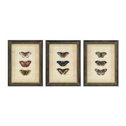 Butterfly Collection Wall Art - Set of 3 - Set of three framed colorful butterfly study prints.