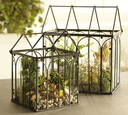 Terrariums by Pottery Barn