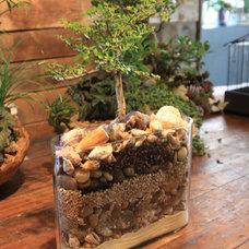 Asian Plants by GARDEN Atlanta