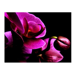 Studio D&K - Botanical Print or Canvas Large Wall Art • Abstract Art Flower Photography, 20x3 - Large Botanical Print Featuring Vivid Magenta Orchid  Blossoms Against a Black Background