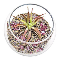 "luludi living frames - Luludi Living Frames Lavender Bouquet - Give a refreshing feng shui gift with our lavender bouquet mett terrarium. Its soothing effect comes from aromatic washington state lavender buds topped with an air plant and colorful stones, in aromatherapy smell, emotion and memory are all linked not only do certain smells affect how we feel emotionally, but our energy level as well, in feng shui scent also relates to the flow of chi pleasant aromas bring in a healthy flow of chi, available as shown or may be custom-tailored, dimensions: 4. 75"" diameter x 4. 75"" height, weight (approx): 12 oz, terrariums are unique landscapes so finished pieces may vary, Suggestion for care:, no direct sun required, mist once per week remove air plant first, mist and allow to dry before replacing in terrarium, upon receipt soak air plant in bowl of water for 30 minutes, allow to dry then place plant in terrarium, our line of feng shui terrariums provide uplifting and relaxing experiences:, lavender, lavender aroma is known to be most effective at relaxing brain waves and reducing stress. It is used in a wide variety of treatments for restlessness, insomnia and anxiety, lavender is considered an ancient symbol of love and cleanliness, and has myriad uses in feng shui such as bringing fresh energy into your home or office, lavender-colored flowers speak of wealth and wisdom when given as a gift and represent purity, silence and luck and also convey a message of devotion, mett, mett commonly translates to ""loving-kindness"" and is a very specific form of love a strong wish for the happiness of others independent of all self-interest"