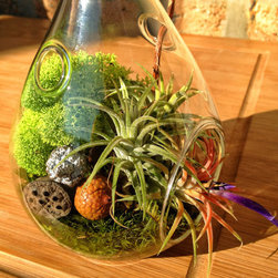 Teardrop Air Plant and Moss Terrarium by Lovely Terrariums - Charming terrariums are like miniature worlds ensconced in glass.