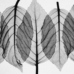 Murals Your Way - Fuscia Leaves-Black & White Wall Art - Contemporary and organic, this black and white wall mural offers a plethora of decorating possibilities