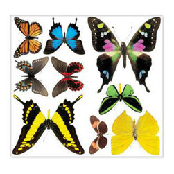 Biggies, Incorporated - Wall Stickies - Butterflies - Wall Stickies - Butterflies.