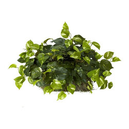 Pothos Set on Foam Sheet Silk Plant - Give some life to that window ledge, shelf, or mantelpiece with this beautiful Pothos ledge silk plant . Perfectly sized to fit a ledge, this plant is both stately and whimsical at the same time. With lush greens that will dangle just so, it will bring you years of enjoyment, without any water or other type of care. Makes a great apartment-warming gift as well! Height= 15 in x Width= 24 in x Depth= 13 in