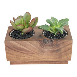 """Crassula and Faucaria - 3"""" Domestic Hardwood Potted Cactus and Succulents - Very modern handmade cube is made from solid domestic walnut hardwood native to the Eastern United States. A Crassula ovata (Jade plant) and a Facauria candida (Animal's mouth plant) were selected to make this nice combination for you to enjoy. Place indoors under bright light. Water only twice a month and avoid spilling when watering. Tung oil or beeswax will help extend the lifespan of your planter and maintain a shiny look."""