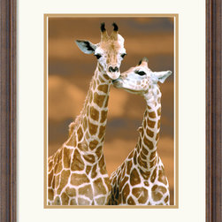 Amanti Art - Giraffe First Love Framed Print - Love shows no boundaries with this image of 'Giraffe First Love'.