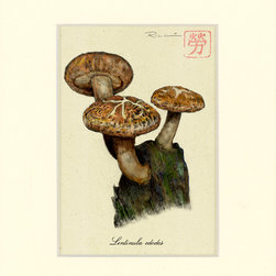 Studio 1022 - Shiitake Mushroom Print, 8 X 10 - Shiitake Mushrooms. An edible mushroom native to East Asia, which is cultivated and consumed in many Asian countries, as well as being dried and exported to many countries around the world.