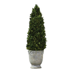 Boxwood Cone Topiary - Preserved, Natural Evergreen Foliage Potted In A Light Stone Finished, Ceramic Planter.