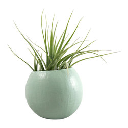 Mini Air Plant Pod - Sage // Planter (with air plant) - These mini air plant pods are natural pods that have been handpainted and repurposed into a planter so each pod is unique and organic in size/shape. These natural vessels make great displays for air plants. The plant pods would look great displayed along a shelf, desk, or window sill.