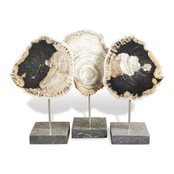 Kathy Kuo Home - Modern Petrified Natural Wood Sculptures- Set of 3 - Sometimes, things that are incomprehensibly old deliver the most modern look.  This trio of petrified wood definitely fit into that category; mounted on polished marble bases and expressing their ancient artfulness with the kind of subtle elegance that makes modern organic such a great style.