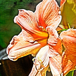 Fine Art Decor_Floral - Color photography. Custom sizes and printed materials. Sizes range from desktop to wall paper. Please contact for details.