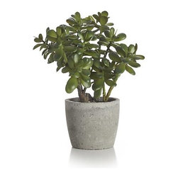 Potted Jade Plant - The sculptural beauty of lustrous succulent plants is realistically handcrafted for year-round use. Each faux plant is potted in a concrete pot.