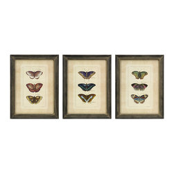 Butterfly Collection Wall Art - Set of 3 - *Set of three framed colorful butterfly study prints.