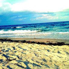 Tropical Artwork by Beach Bum Chix
