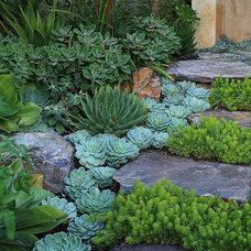 Eclectic  Succulant Garden