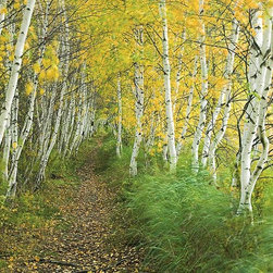 Magic Murals - Birch Forest in Maine Wallpaper Wall Mural - Self-Adhesive - Multiple Sizes - Ma - Birch Forest in Maine Wall Mural