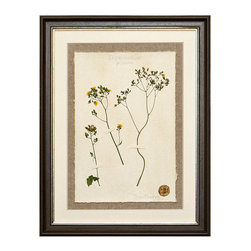 Botanicals Flowers J - Tiny Yellow - Framed - A stunning framed display of a flattened botanical specimen with many different options available to suit your mood or d�cor. Each specimen is one of a kind and no two will be alike. For those who desire uniqueness in their wall hangings, the Botanicals Collection can be placed in a room alone or with many clustered together for wonderful way to bring your love of nature indoors.