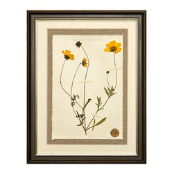 Botanicals Flowers I - Yellow Daisy - Framed - A stunning framed display of a flattened botanical specimen with many different options available to suit your mood or d�cor. Each specimen is one of a kind and no two will be alike. For those who desire uniqueness in their wall hangings, the Botanicals Collection can be placed in a room alone or with many clustered together for wonderful way to bring your love of nature indoors.