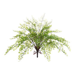 Silk Plants Direct - Silk Plants Direct Maidenhair Fern Bush (Pack of 12) - Pack of 12. Silk Plants Direct specializes in manufacturing, design and supply of the most life-like, premium quality artificial plants, trees, flowers, arrangements, topiaries and containers for home, office and commercial use. Our Maidenhair Fern Bush includes the following: