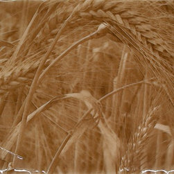 Living Walls Tile - Wheatfield Backsplash 4 tile set, Wheat 4 - Even if you've never walked through a field of ripe wheat, the Wheatfield Backsplash art tile can take you there. Its fine detail evokes the rich aroma of the grain, the feel of the rough kernels on your palm as you pass. You may even hear the dry leaves ticking in the wind.